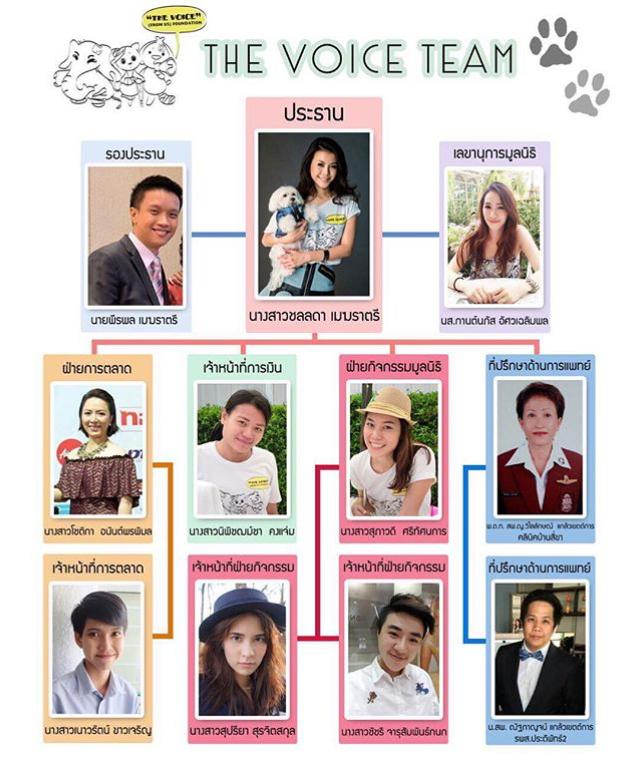 The Voice Team