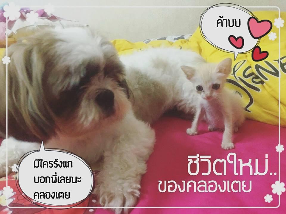 khlong toey cat